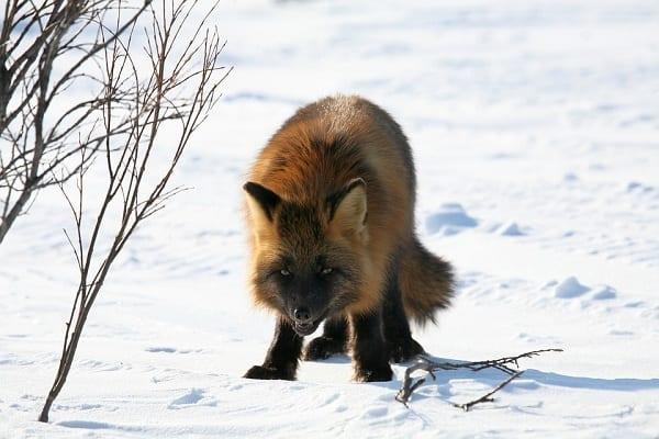Jak się zachować, kiedy spotkamy dzikie zwierzę na swojej drodze? Ekspert udzielił kilku prostych porad