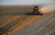 Powraca temat GMO. Naukowcy proponują, aby państwa UE samodzielnie decydowały, czy chcą uprawiać takie rośliny