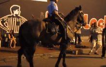 Ten policyjny koń wyraźnie ma poczucie rytmu! Tańczy wraz z ulicznymi grajkami [WIDEO]