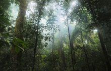 Polacy wykupią część lasu tropikalnego w Kolumbii. Powstanie tam stacja badawcza