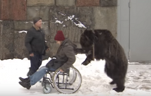Rosja: Niedźwiedź prowadzi wózek inwalidzki swojego właściciela [WIDEO]