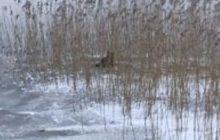 Ostróda: Pies przymarzł do tafli jeziora. Uratowali go policjanci