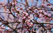 Przed nami prawdziwa wiosna? W okolicach Wielkanocy temperatura może przekroczyć 20 stopni!