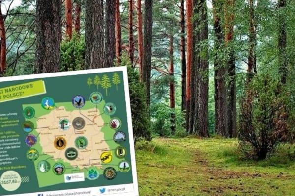 Na jednego Polaka przypada już 0,24 ha lasów.