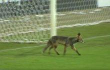 Robert Lewandowski nie wziął udziału w treningu kadry. Zastąpił go inny lis pola karnego. Prawdziwy [WIDEO]