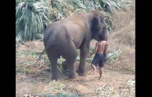 PETA opublikowała nagranie, na którym widać traktowanie słoni biorących udział w grze w polo