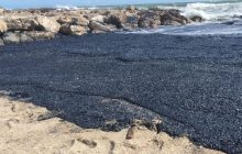 Inwazja meduz na francuskiej plaży. Morze wyrzuciło miliony stworzeń [WIDEO]