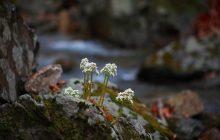 Pozostałości najstarszych znanych roślin lądowych odnalezione pod Kielcami!