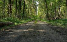 Cała Puszcza Białowieska powinna być parkiem narodowym. Naukowcy apelują do premiera