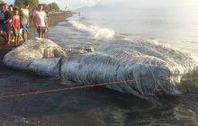 Morze wyrzuciło wielkiego włochatego stwora. Według mieszkańców Filipin to zła wróżba [FOTO]