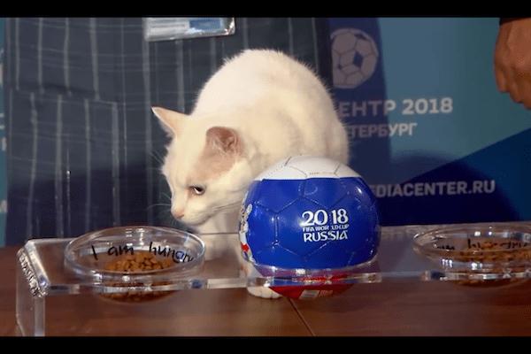 Już nie ośmiornica i wydra. Tym razem wyniki Mistrzostw Świata typuje... głuchy kot! [WIDEO]